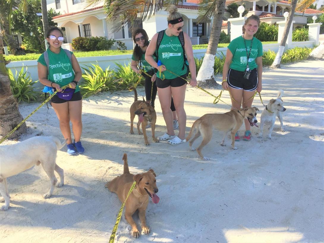 Perros de un refugio paseando junto a nuestras voluntarias de cuidado animal en Belice.